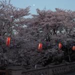 月と元荒川の桜